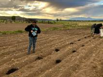Anatniuq Gonzalez-Molina, seventh generation land grant heir. Planting the hemp in little pockets of organic compost soil.